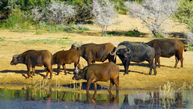 Big Five Safari