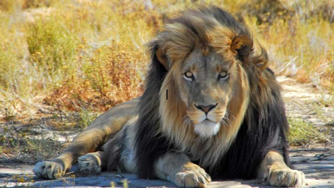 Big Five Safaris