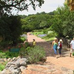 National Botonical Garden Kirstenbosch