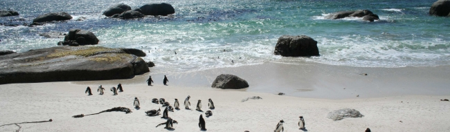 boulders-beach-pinguine