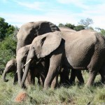 Addo Nationalpark