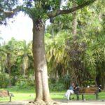 Stadtgarten Companys Garden