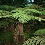 Flora und Fauna an der Garden Route